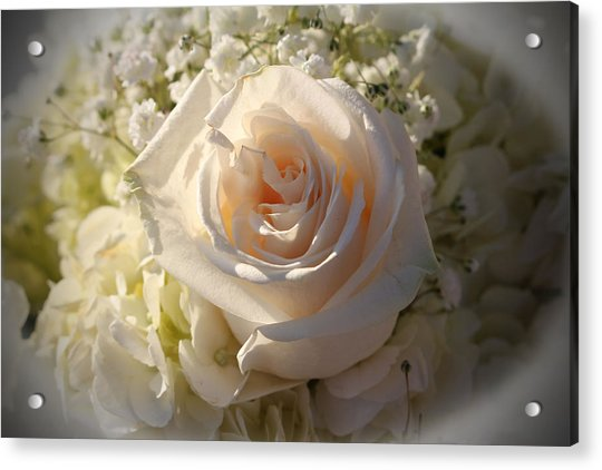 Acrylic Print featuring the photograph Elegant White Roses by Cynthia Guinn