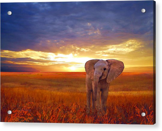 Acrylic Print featuring the painting Elephant Baby by Valerie Anne Kelly