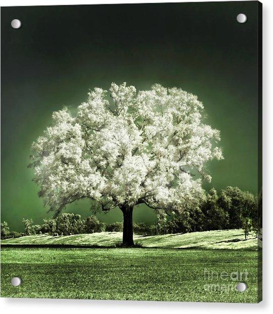 Emerald Meadow Square Acrylic Print