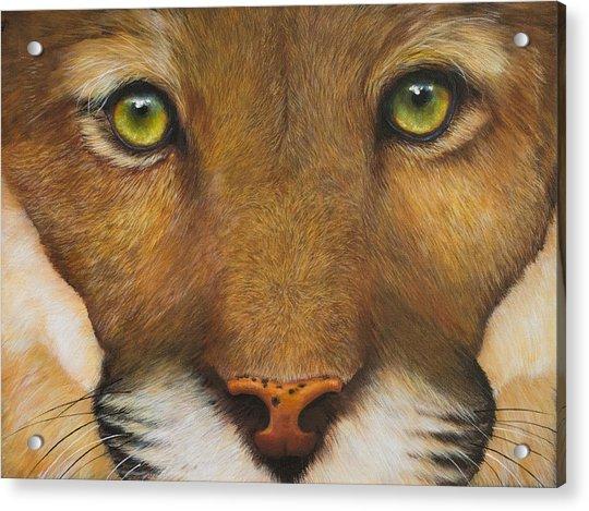 Endangered Eyes Acrylic Print