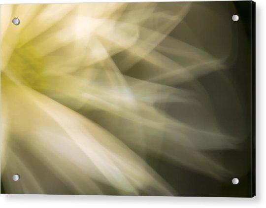 Energetic Coneflower  Acrylic Print