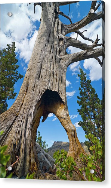 Ent Tree On The Move Acrylic Print