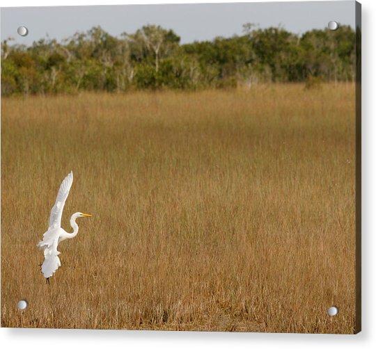Everglades 429 Acrylic Print