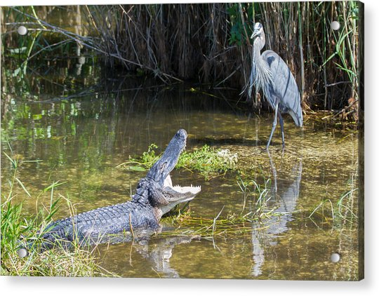 Everglades 431 Acrylic Print