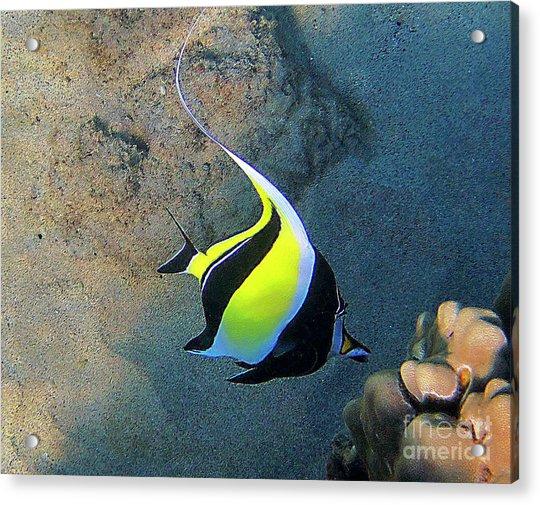 Exotic Reef Fish  Acrylic Print