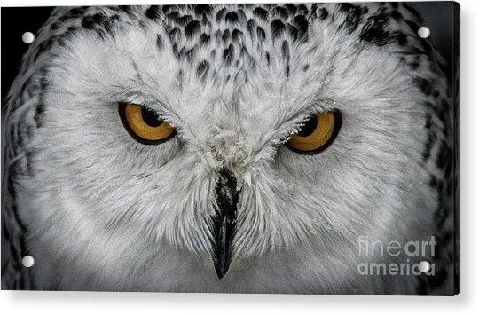 Eye-to-eye Acrylic Print