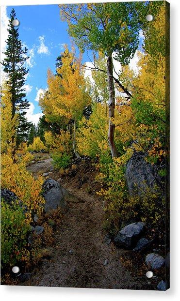 Fall Aspens In The Eastern Sierra Acrylic Print
