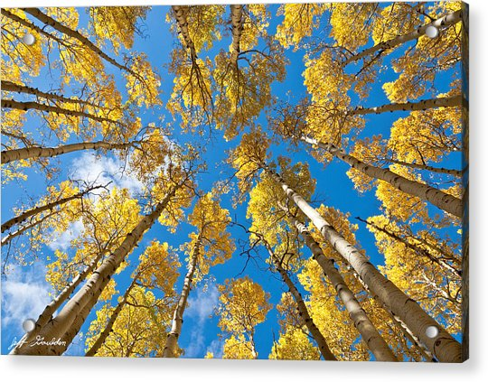 Fall Colored Aspens In The Inner Basin Acrylic Print