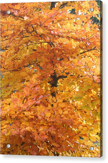 Fall Colors Acrylic Print by Mary Gaines