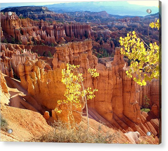 Fall In Bryce Canyon Acrylic Print