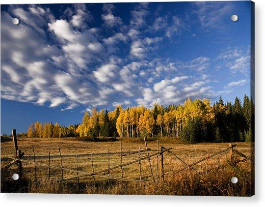 Fall In The Cariboo Acrylic Print by Detlef Klahm