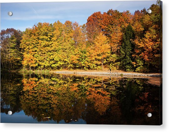 Fall Ontario Forest Reflecting In Pond  Acrylic Print
