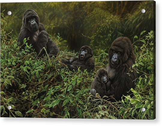 Acrylic Print featuring the painting Family Of Gorillas by Alan M Hunt