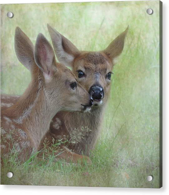 Acrylic Print featuring the photograph Fawn Secrets by Sally Banfill