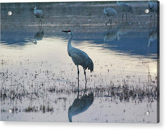 Acrylic Print featuring the pyrography Feeling Blue by Michael Lucarelli