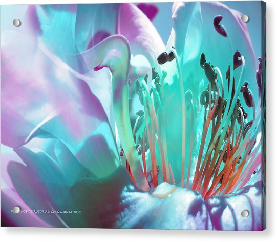 Feliz Verano Acrylic Print