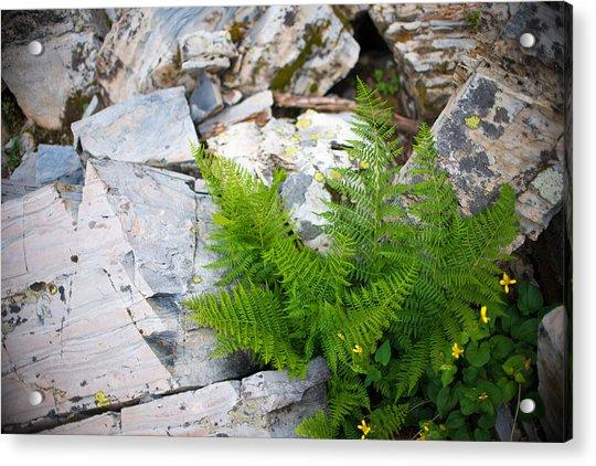 Fern Among Glacial Rock Acrylic Print