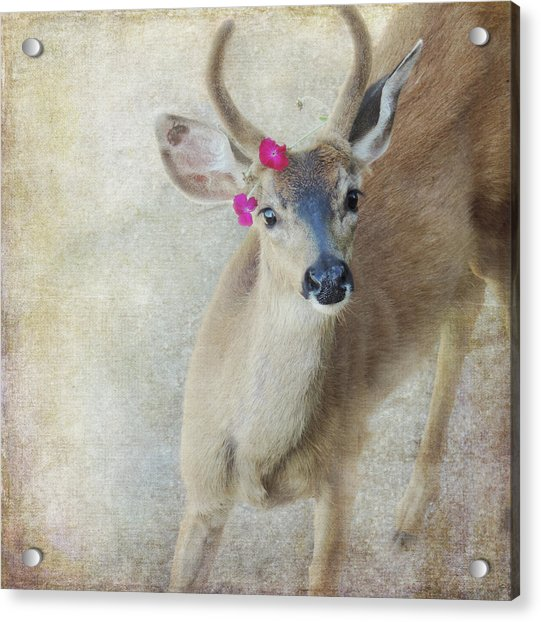 Acrylic Print featuring the photograph Festive Deer by Sally Banfill