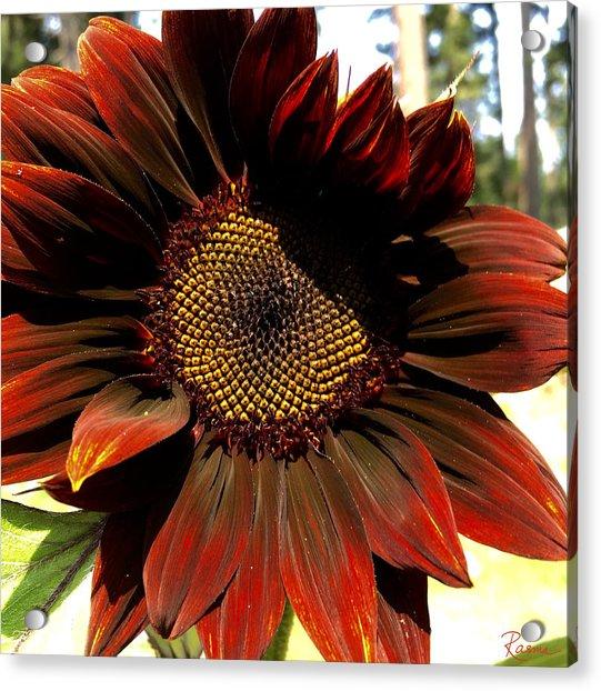 Fibonacci Hues Acrylic Print