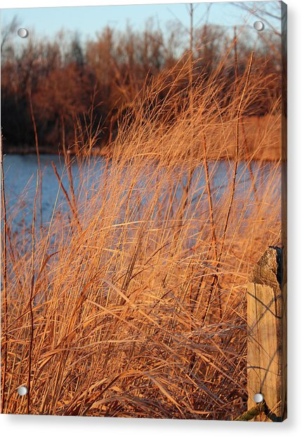 Amber Brush On The River Acrylic Print