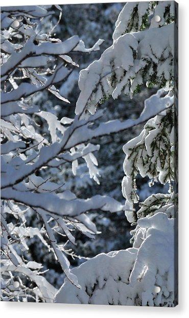 First Snow II Acrylic Print