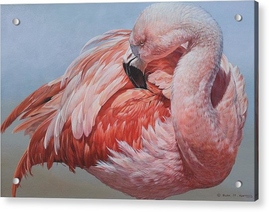 Acrylic Print featuring the painting Flamingo Preening by Alan M Hunt