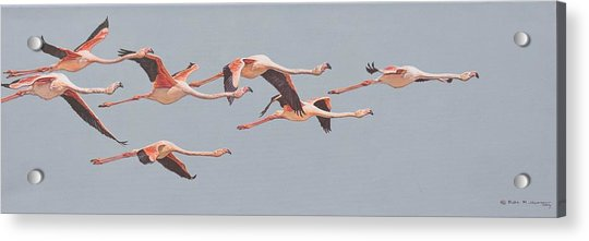 Acrylic Print featuring the painting Flamingos In Flight by Alan M Hunt