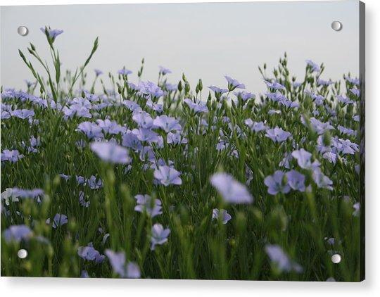 Flax V Acrylic Print