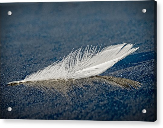 Floating Feather Reflection Acrylic Print