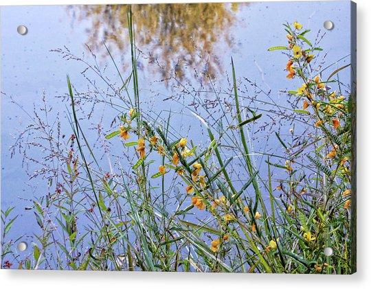 Floral Pond  Acrylic Print