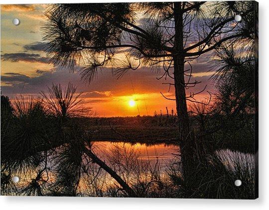 Florida Pine Sunset Acrylic Print