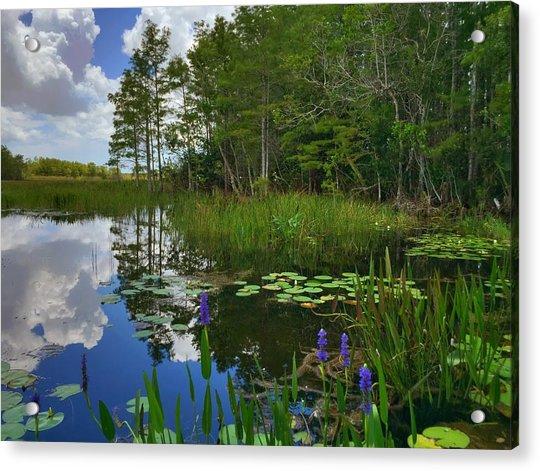 Florida Wetlands Reflections Acrylic Print