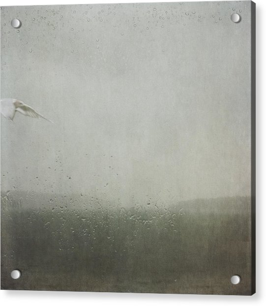 Acrylic Print featuring the photograph Fly Between The Raindrops by Sally Banfill