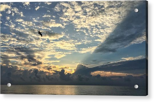 Flying To The Left Acrylic Print