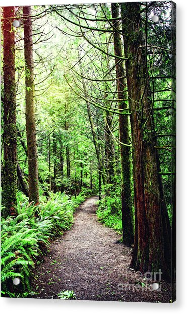 Forest Invitation Acrylic Print by Lincoln Rogers