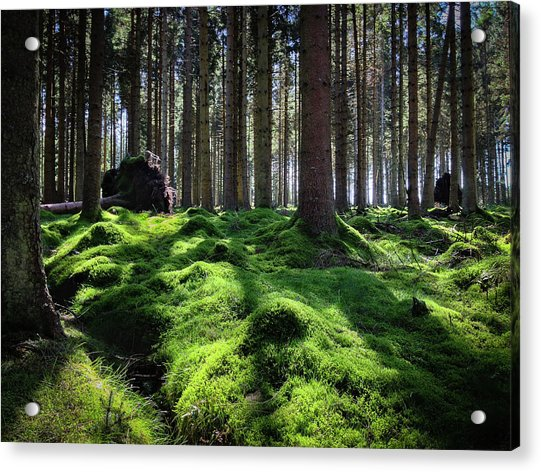 Forest Of Verdacy Acrylic Print