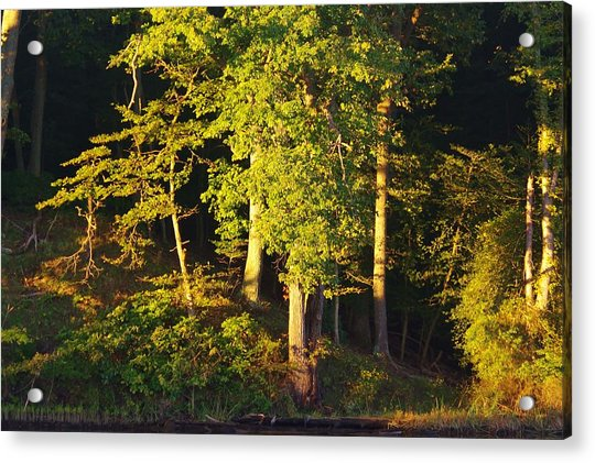 Forests Edge Acrylic Print
