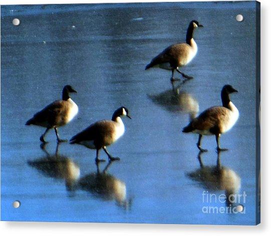 Four Geese Walking On Ice Acrylic Print