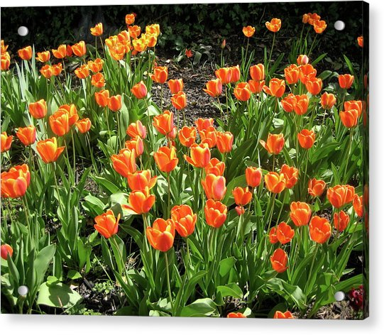 Acrylic Print featuring the pyrography Fred's Garden by Michael Lucarelli