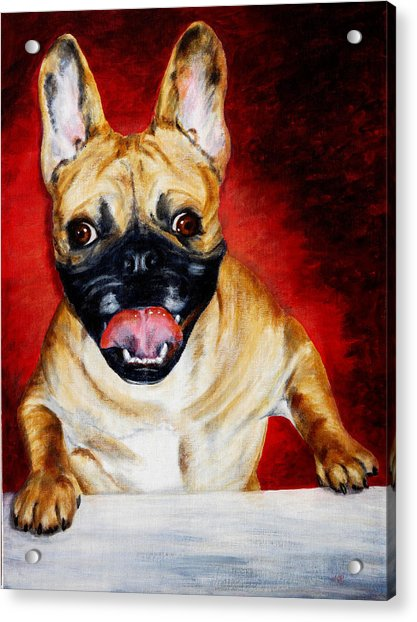 Frenchie With A Smile Acrylic Print by Karen Peterson
