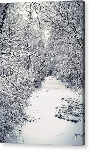 Frosted Feeder Acrylic Print