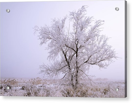 Frozen Ground Acrylic Print