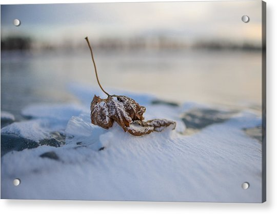 Frozen Leaf On Lake Reno Acrylic Print