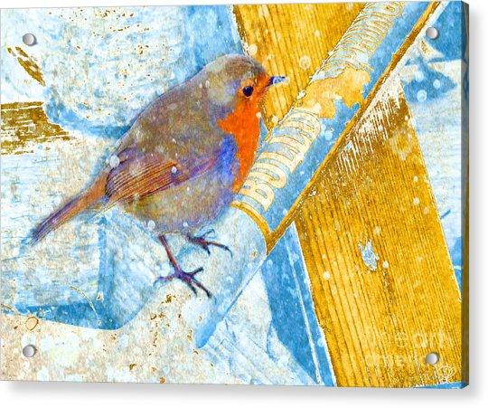 Garden Robin Acrylic Print