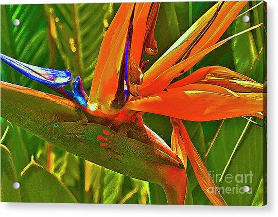 Gecko On Bird Of Paradise Acrylic Print
