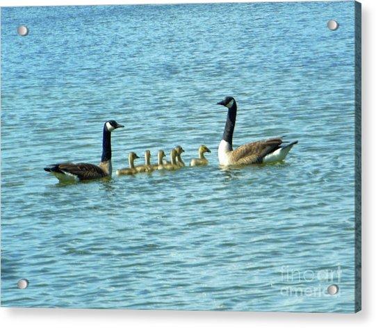 Geese Proud Parents Acrylic Print