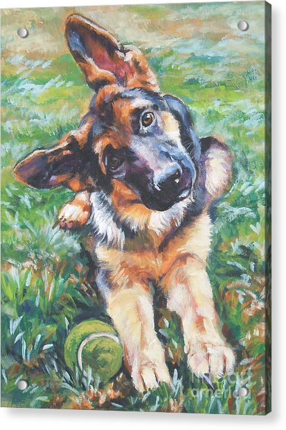 German Shepherd Pup With Ball Acrylic Print