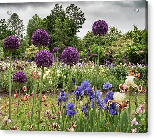 Giant Allium Guards Acrylic Print