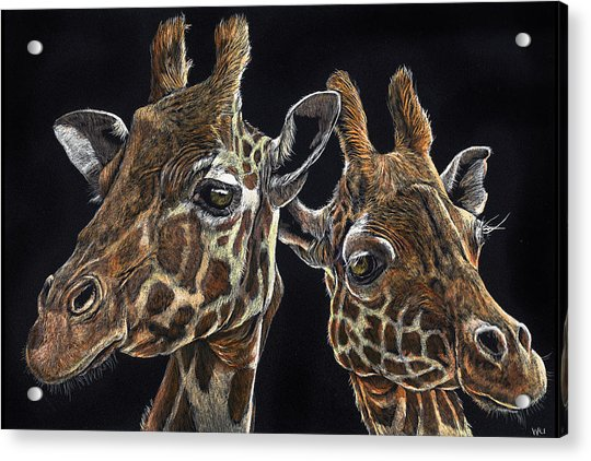Giraffe Pair Acrylic Print