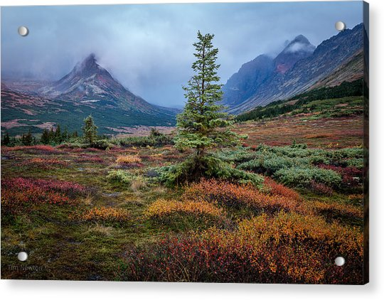 Acrylic Print featuring the photograph Glen Alps In The Autumn Rain by Tim Newton
